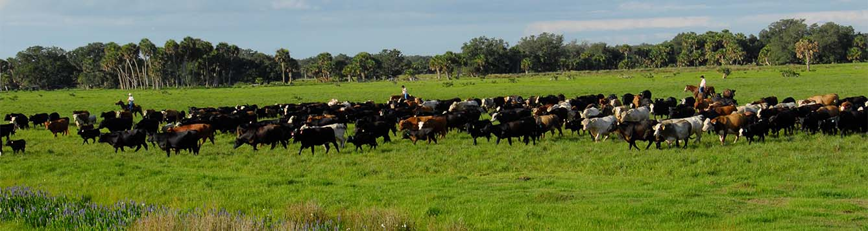 Image - subtropical grassland at Buck Island Ranch in central Florida