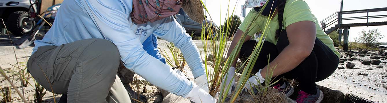image - volunteers planting saltmeadow dord grass in the sand for a sea grant living shoreline restoration