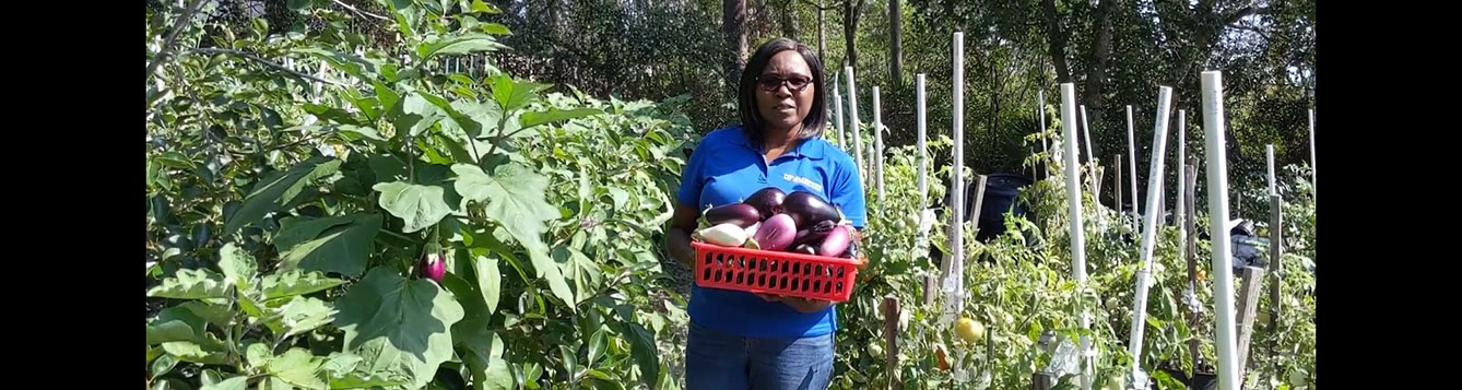 Norma Samuel in a field holding eggplants