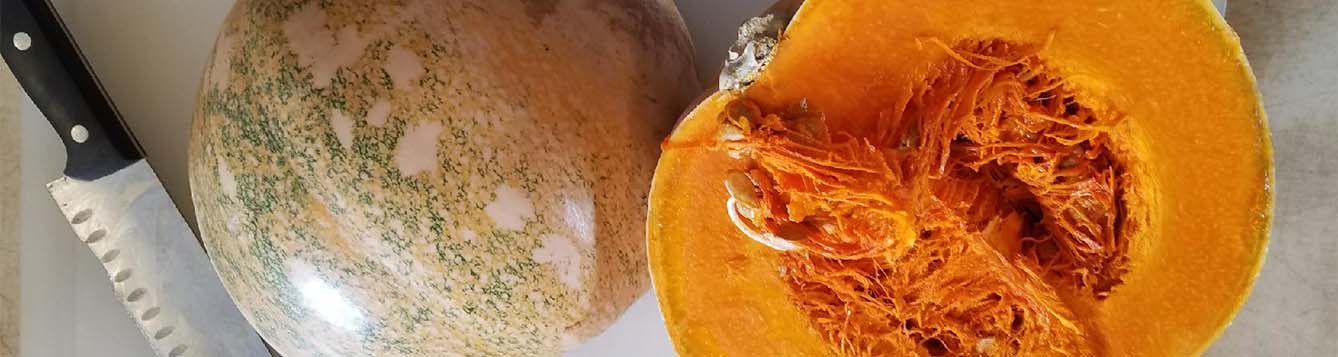 image - calabaza - cuban pumpkin from UF IFAS TREC research with Dr. Meru
