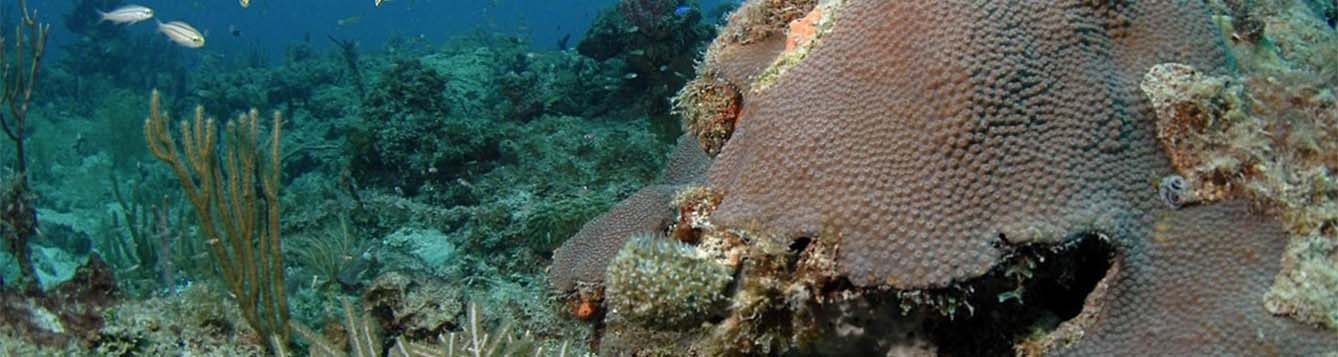 image - Southeast Coral Reef Ecosystem Conservation Area