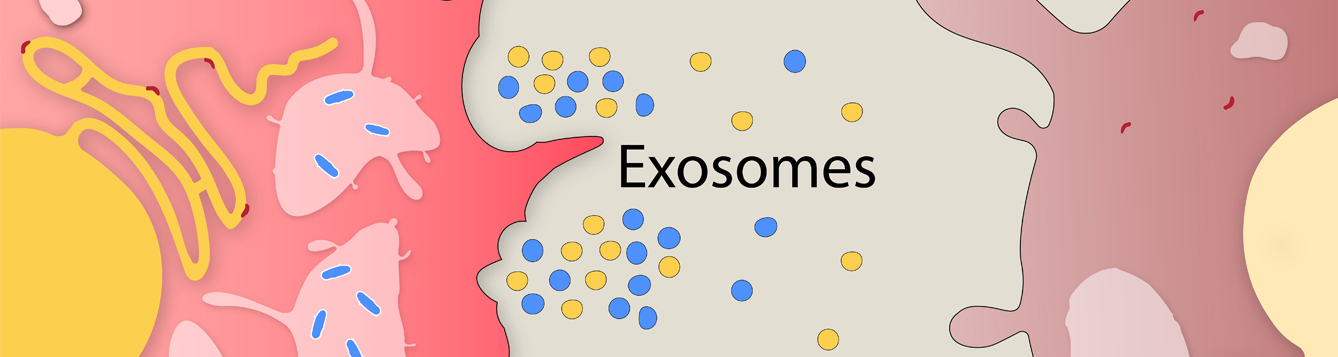 Researchers' rendering of exosomes