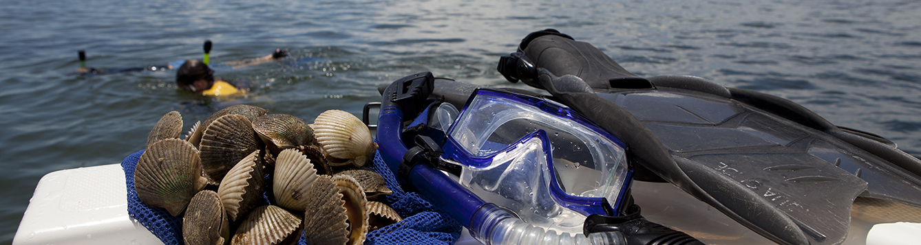 snorkeling mask, fins and scallops on a boat overlooking the water