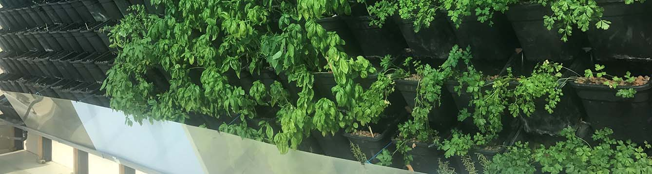 image - hydroponics of leafy vegetables in a backyard
