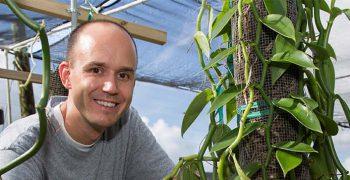 image -Alan Chambers - vanilla cultivars at TREC