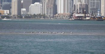 image - Biscayne Bay waterway in Miami