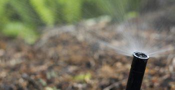 pop-up in-ground sprinkler head spraying mulch