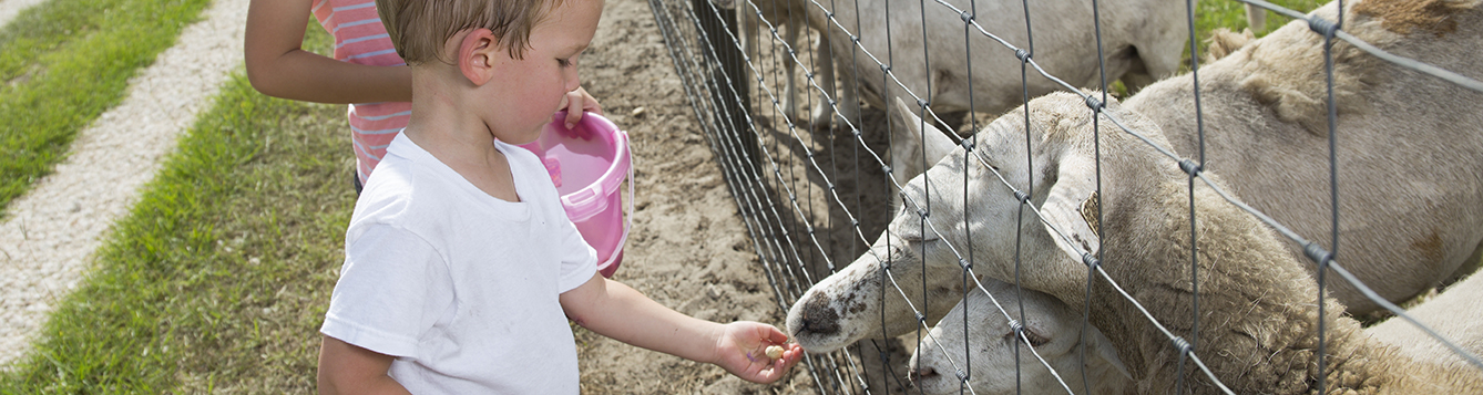 A young boy and girl feeding and petting sheep at a small farm
