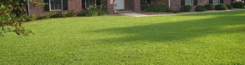centipedegrass yard