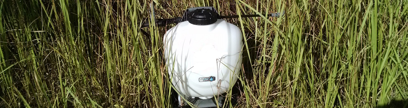 backpack sprayer in cogongrass