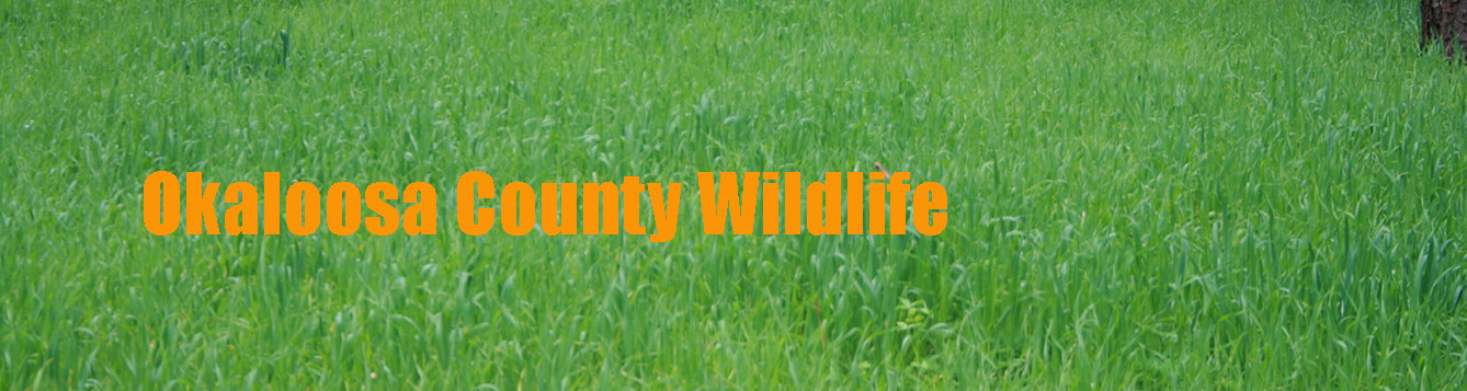 Okaloosa County Wildlife written over a picture of ryegrass