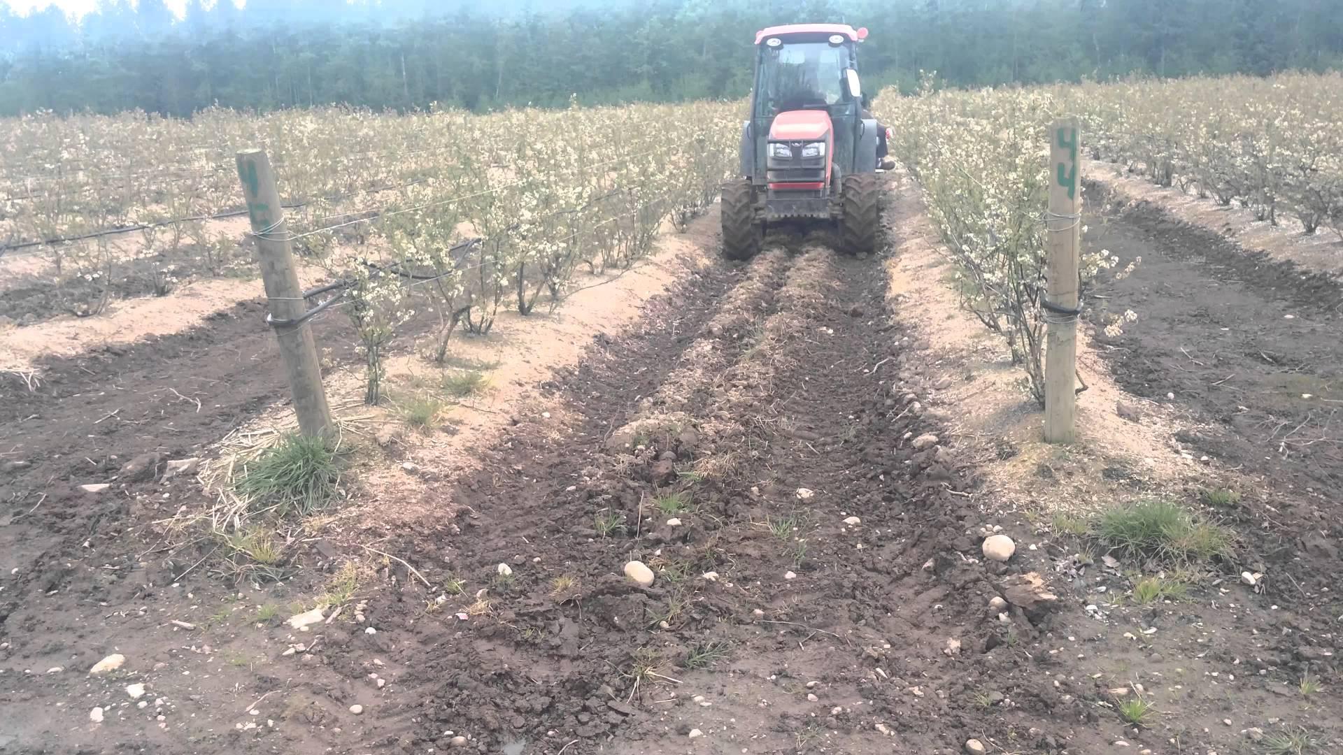 Blueberry fertilizer spreader