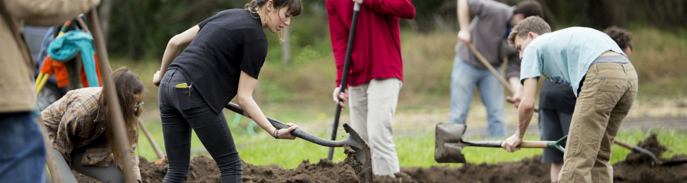 people with shovels digging to plant shrubs