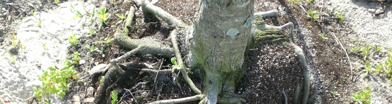 circling diving roots