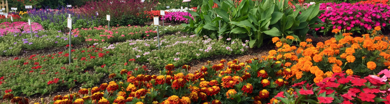 trial garden flowers