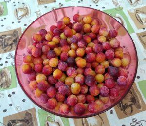bowl of flatwood plum fruit