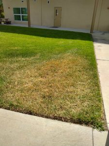 irrigation dry spot in lawn