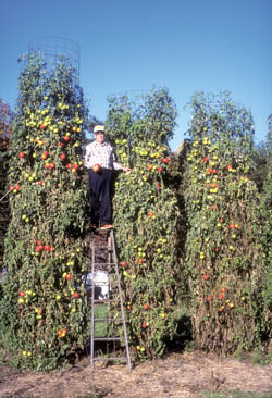 Charles Wilber with Tomato Plants