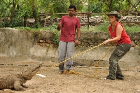 Practicing ex situ conservation biology at the Madras Crocodile Bank Trust in Mamallapuram, India.