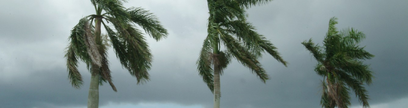 Palm trees on a windy, cloudy day.