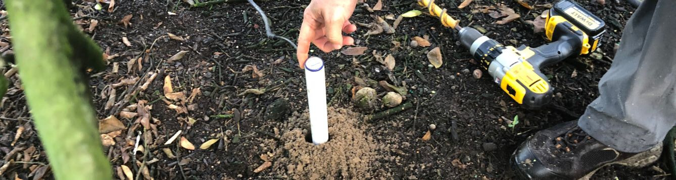 soil moisture probe being installed in soil beneath citrus tree