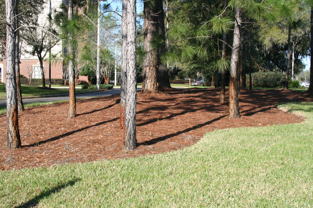 Landscape bed mulched