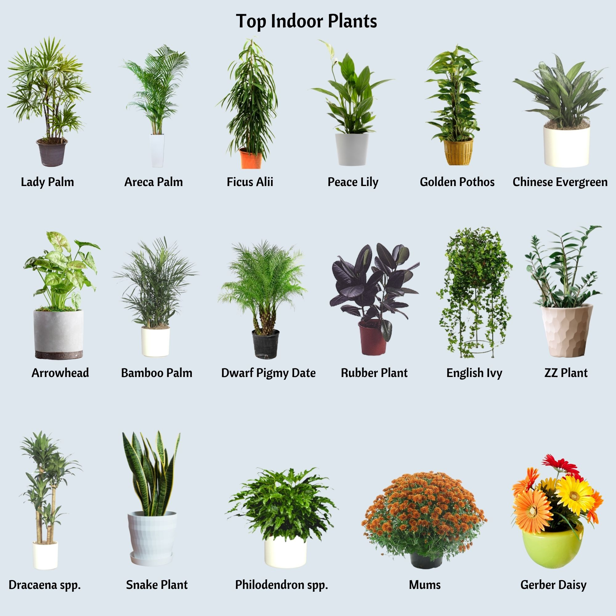 17 best indoor plants