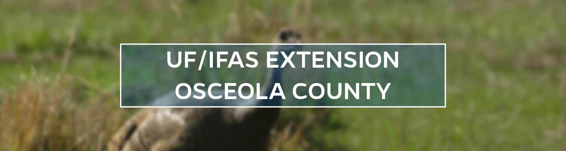 UF/IFAS Extension Osceola County