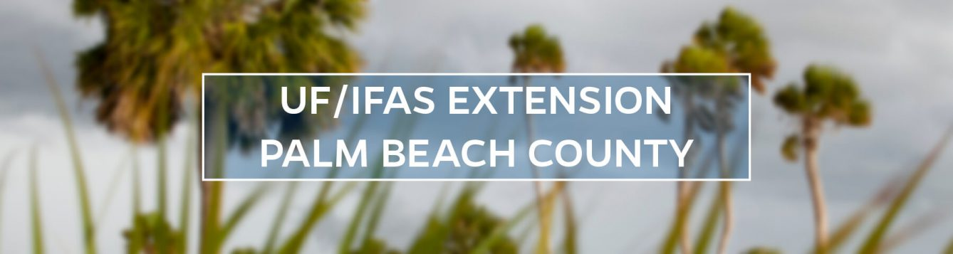 UF/IFAS Extension Palm Beach County banner