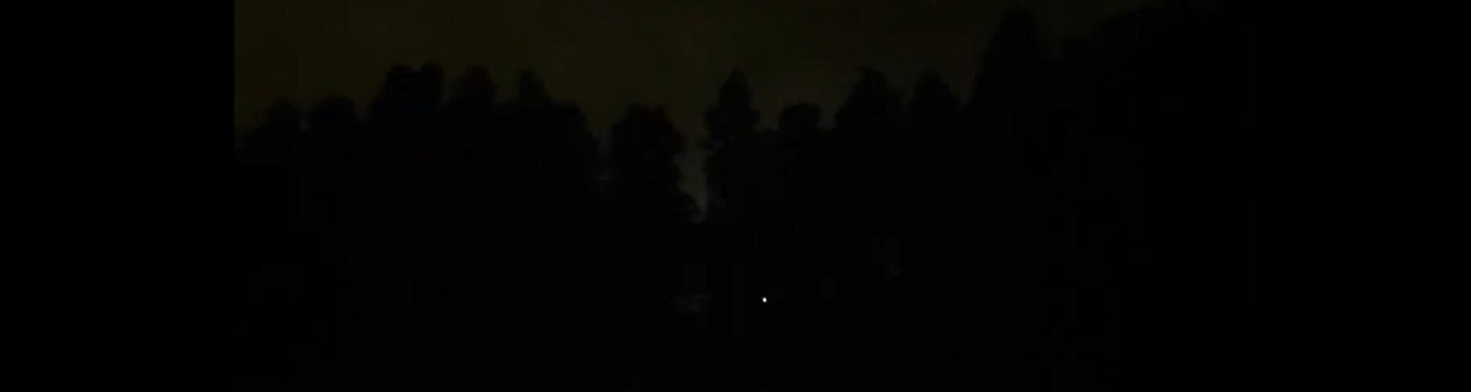 Nighttime skyline with trees and a single point of light from a firefly