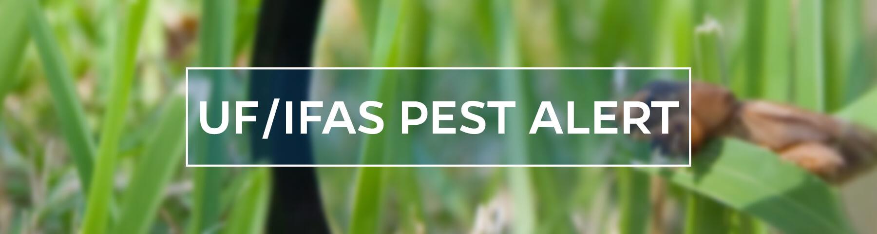 UF/IFAS Pest Alert