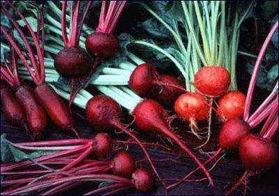 beet_edible_root