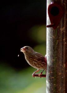 To feature a bird on a bird feeder