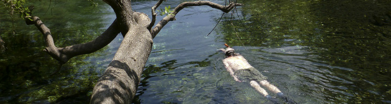 A swimmer enjoying the springs at Ichetucknee Springs State Park.