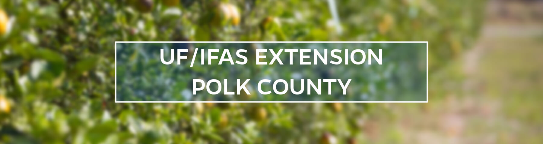 UF/IFAS Extension Polk County