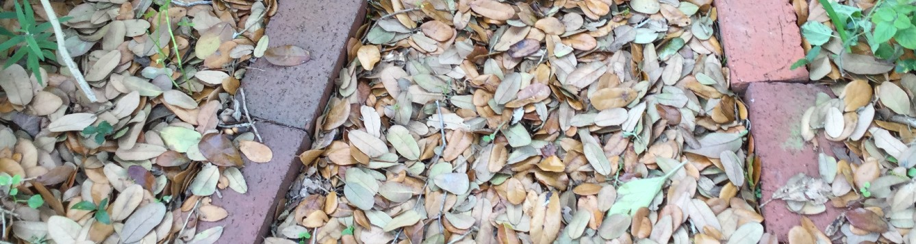 Oak Leaf Mulch