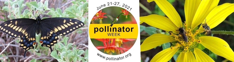 Pollinator week header