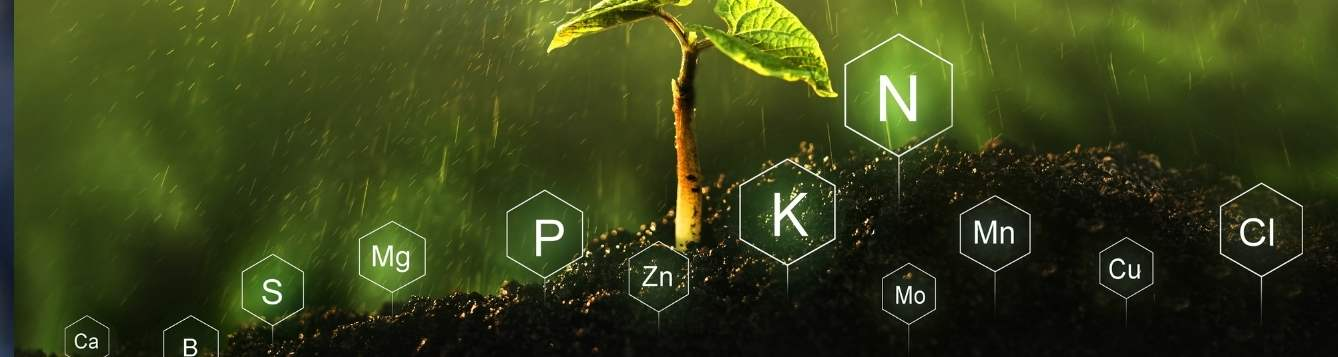 A Plant with the different elemental symbols needed for plant growth.