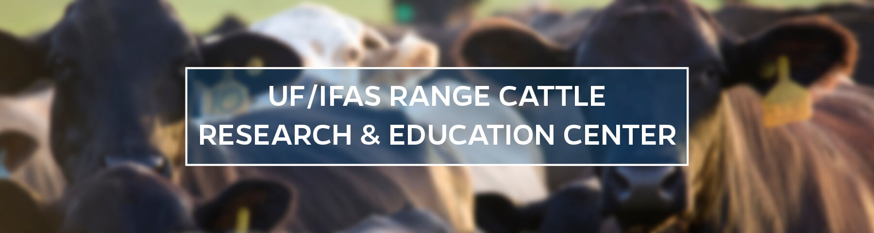 UF/IFAS Range Cattle Research and Education Center
