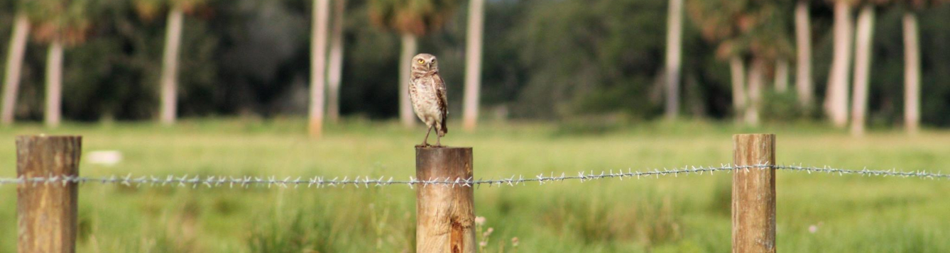 owl sitting of fence post