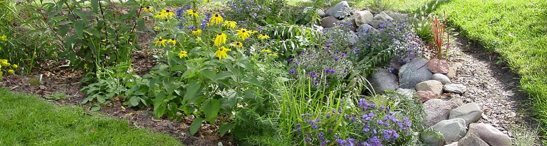 rain garden in florida