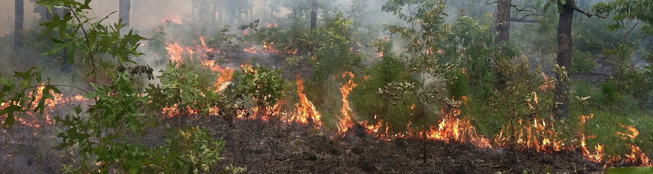 controlled burn on forest land