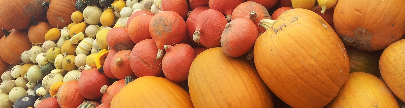 pumpkins, melons, gourds and other cucurbitaceae