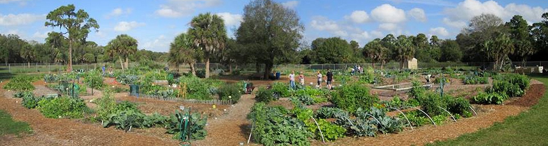 panoramic view of culverhouse community garden