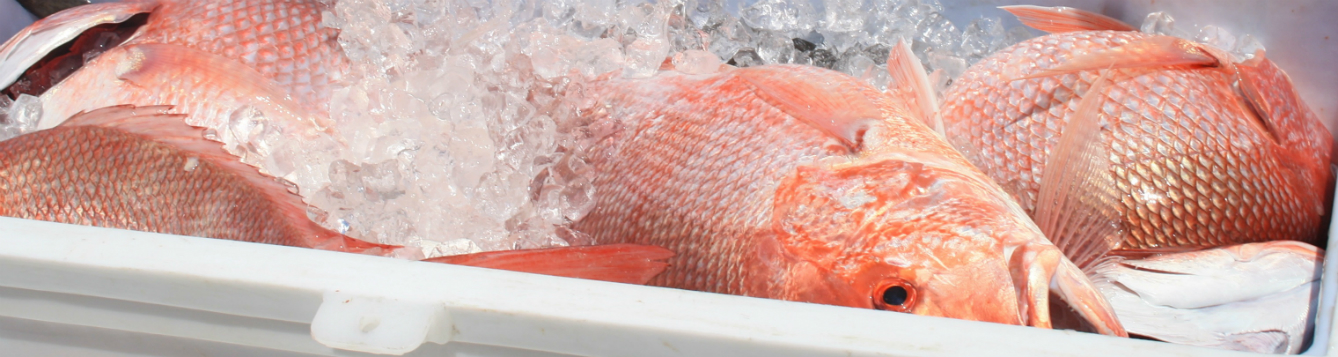 fresh fish on ice in cooler