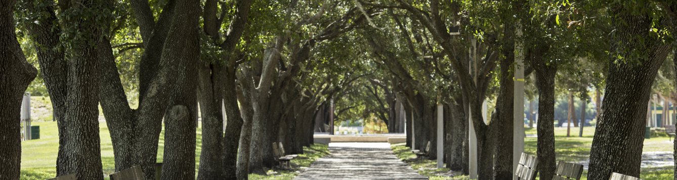 Trees line and shade a roadway.