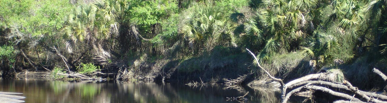 panoramic view of ecosystem at sleeping turtles preserve north