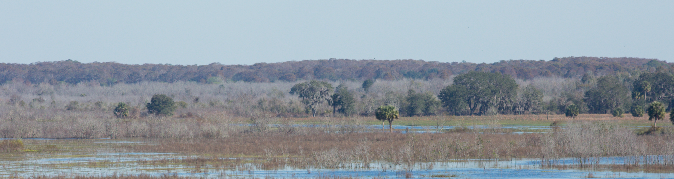 a wetlands natural area under blue skies is shown from Paynes Prairie outside Gainesville, Florida