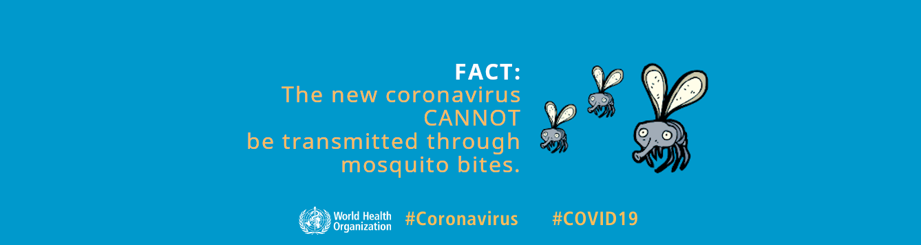 modified World Health Organization infographic noting no connection between mosquitoes and COVID-19