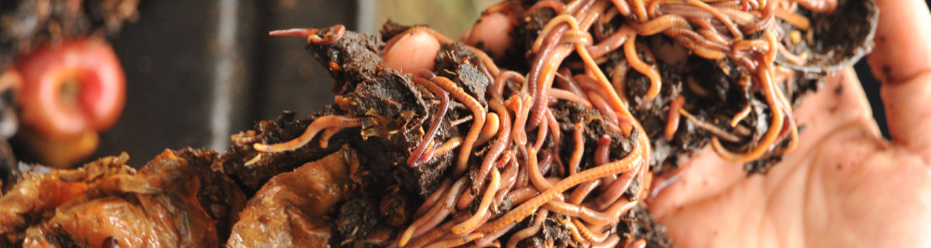 hands hold up a mass of compost and earthworms